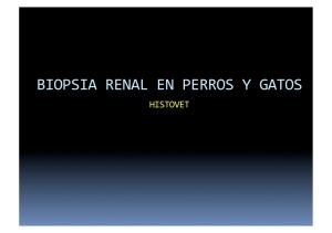 Biopsia renalGTA2010V2wp (arrastrado)